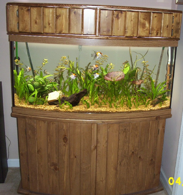 I built the canopy myself. It houses 4 - 2xODNO T8 bulbs. I got the fish plants gravel driftwood etc from my 55gal (sold it). : bow front canopy - memphite.com